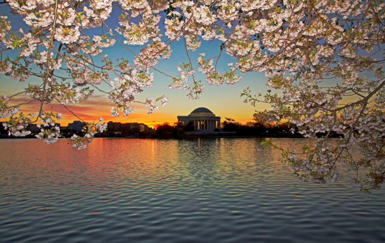 Sunrise And Cherry Blossom